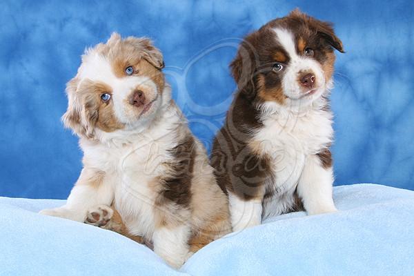 hundefotos kostenlos